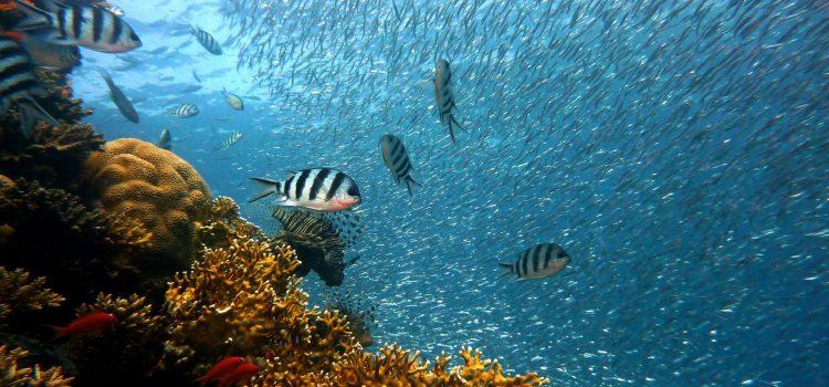 Top 5 des activités aquatiques à faire durant vos vacances